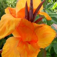 Kwiat w pomarańczowym kolorze