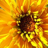 Kwiat w słonecznym kolorze