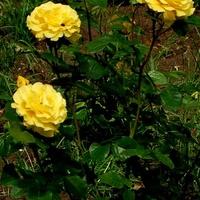 Kwiaty dla trojaczków