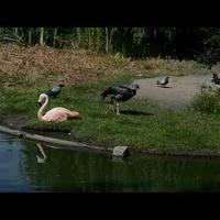Ptaki na wybiegu w ZOO