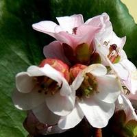 Wiosenny Bukiecik Na