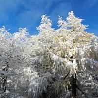 Wspominam zimę 2016