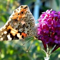 Wspomnienie różu i motylków:)