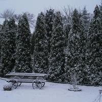Zimowy akcent