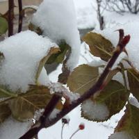 Zimowych widoczków c. d.