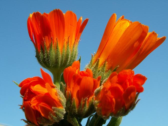 Błękit nieba i kwiaty