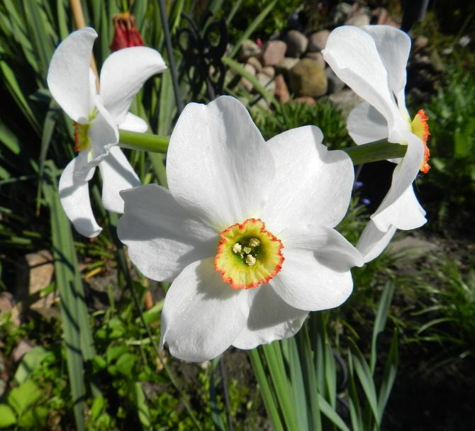 Biały pachnący kwiat