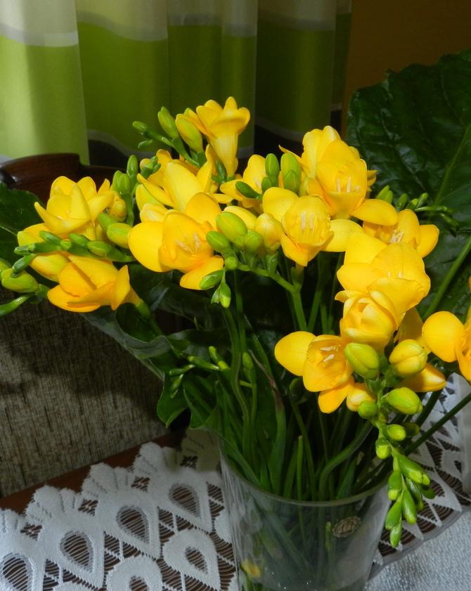 Frezje ,słoneczne kwiaty