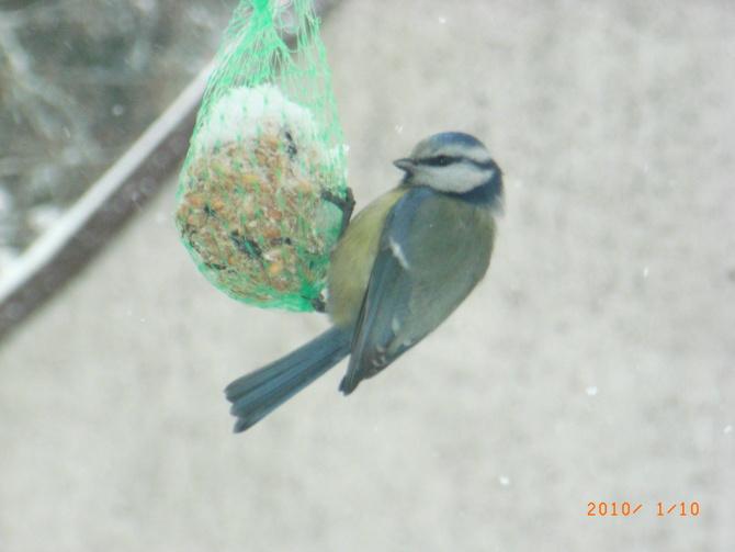 Jaki to ptak? ;)
