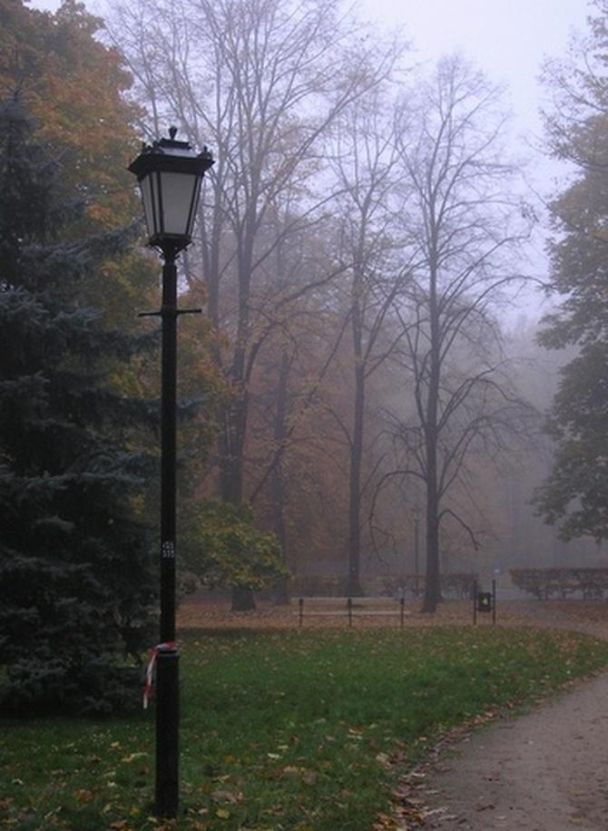 Jesienna mgła w parku