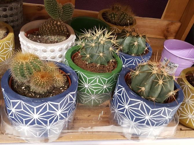 Kaktusy ..................