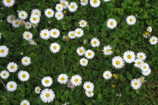 Kwiaty na zielonym tle