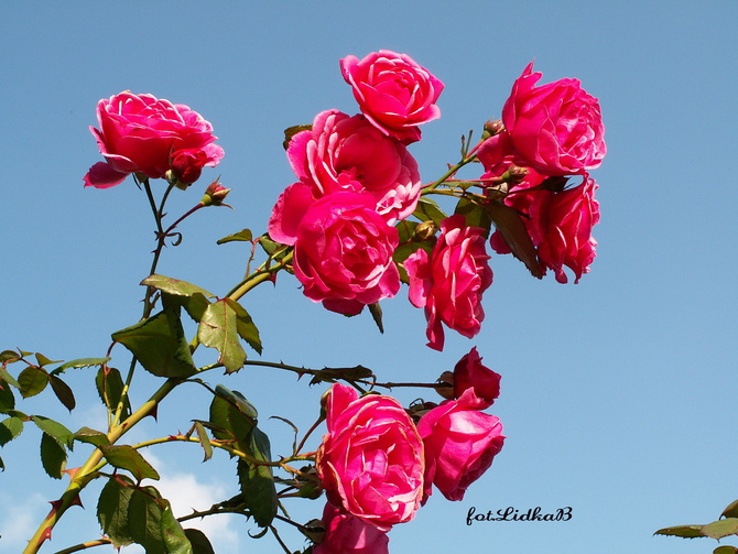 Kwiaty w różowym kolorze
