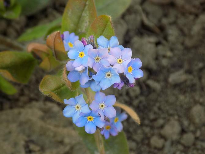 Pamiętacie takie kwiatki? :)