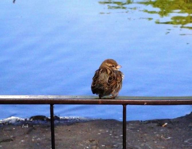Ptaszek po kąpieli w parku