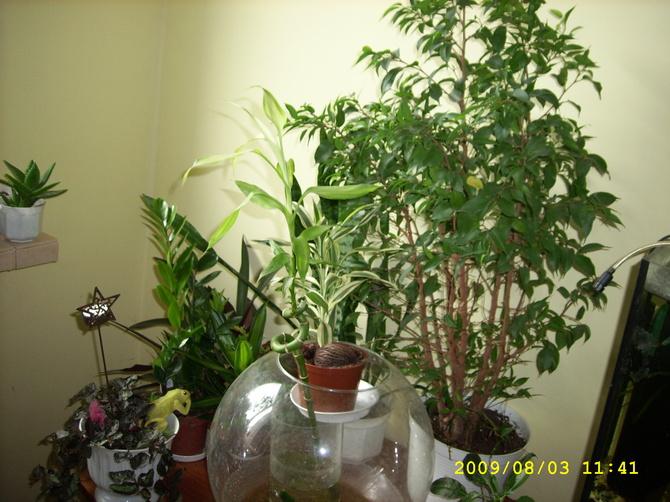 rośliny pokojowe.....
