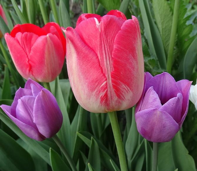 Troszkę wiosny na wieczór :)