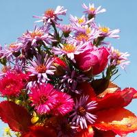 Bukiecik jesiennych kwiatów
