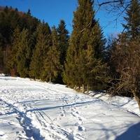 Cudowna łagodność zimy sprzed kilku dni .