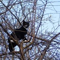 czarny kot .......