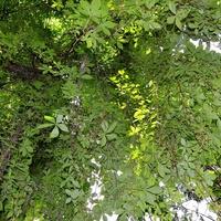drzewo, cz.2