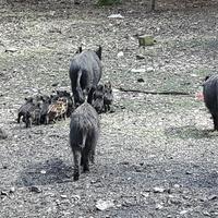 Dzicza rodzinka w lesie