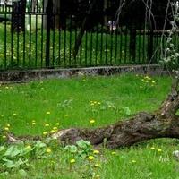 Drzewo-inwalida w parku