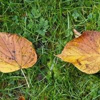 Jesienny romans ....