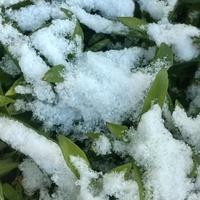 Jest śnieg!