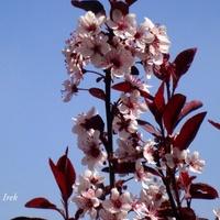 kwiat na tle nieba