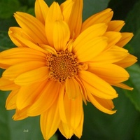 Kwiat w ciepłym kolorze
