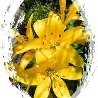 Kwiaty dla Gieni