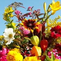 Kwiaty Jesienne W Bu