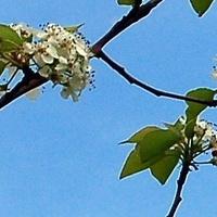 kwiaty wiosenne na tle nieba