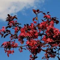 Kwitnąca gałązka na tle nieba