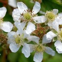 kwitnąca wiosenna gałązka