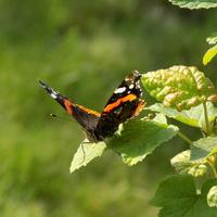 Majowy motyl :)