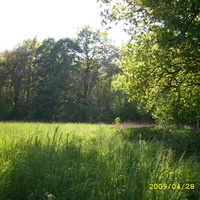 Na dzikiej łące siedząc w trawie...