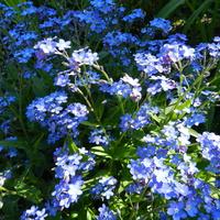 Niebieski kwiatuszek