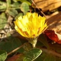 Żółte kwiaty późnego lata