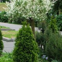 Ogródek na osiedlu założony przez mieszkańców.
