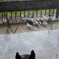 pada , wychodzić czy tylko popatrzeć :)