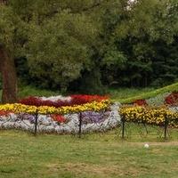 paw zrobiony z kwiatów