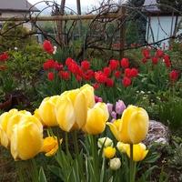 Przeszłe wiosny dalej cieszą.