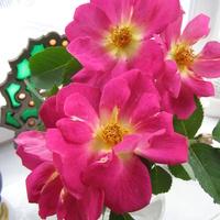 Róża \