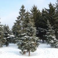 Taka zima była w 2006 r.