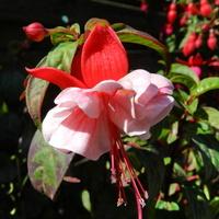 W różowym kolorze