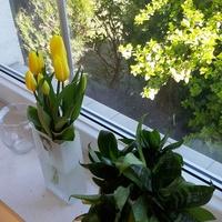 ...Za oknem i na parapecie...też żółto...