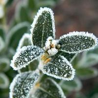 Zima ozdobiła rośliny:)