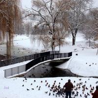 Zima w parku w 2013 r.
